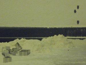 Kellerasseln 2 (Porcellio scaber)