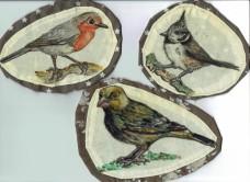 Vogelzeichnungen